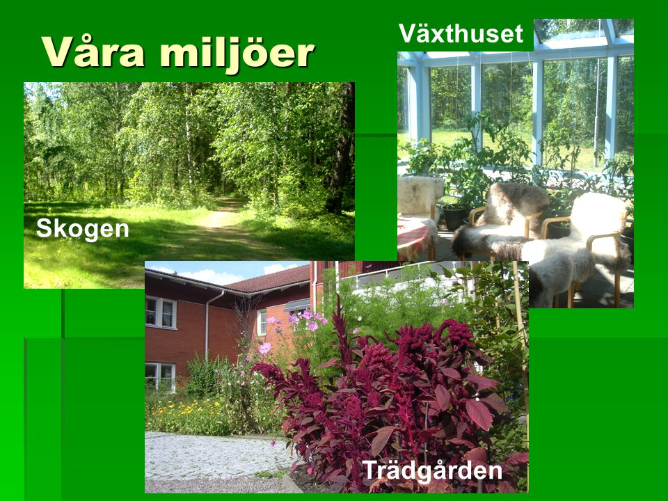 Våra miljöer  Skogen Skogen Växthuset Trädgården