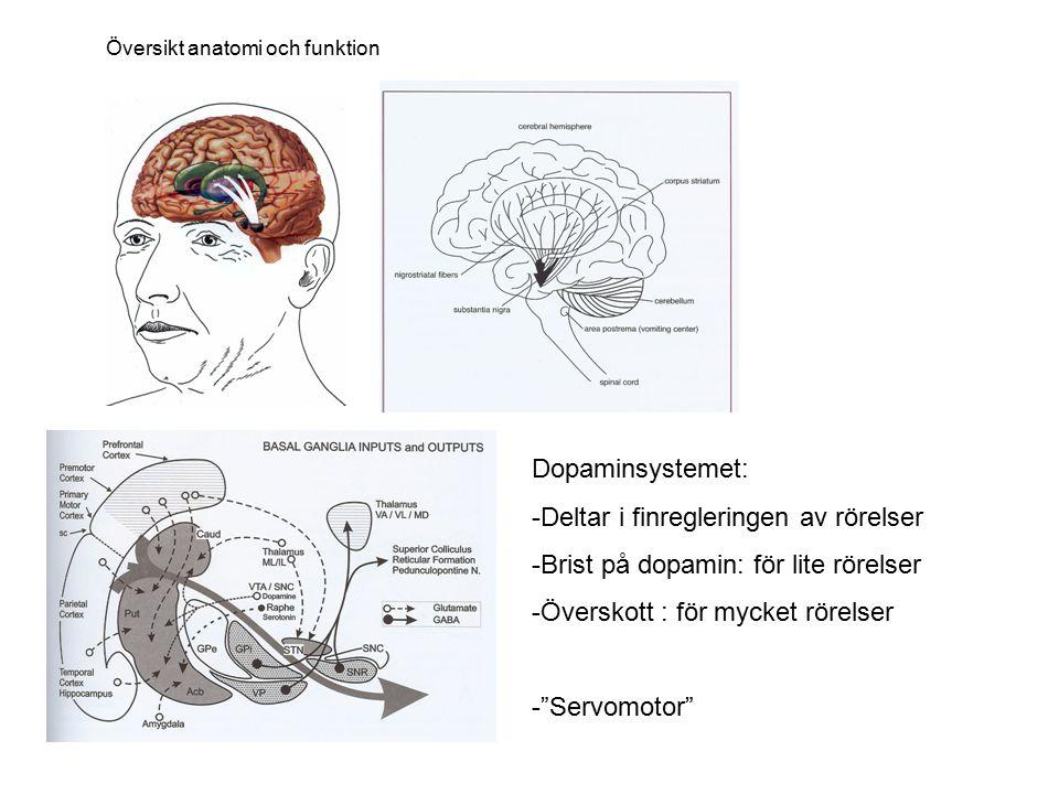 """Dopaminsystemet: -Deltar i finregleringen av rörelser -Brist på dopamin: för lite rörelser -Överskott : för mycket rörelser -""""Servomotor"""" Översikt ana"""
