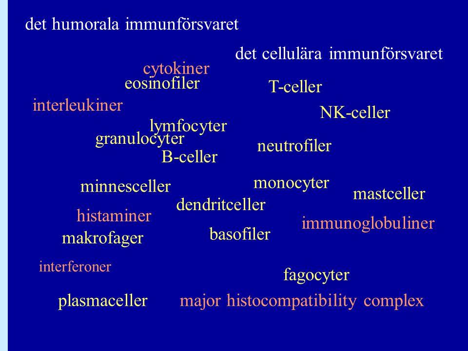 Antikroppsklasser Den konstanta delen bestämmer vilken klass antikroppen hör till.Den konstanta delen bestämmer vilken klass antikroppen hör till.