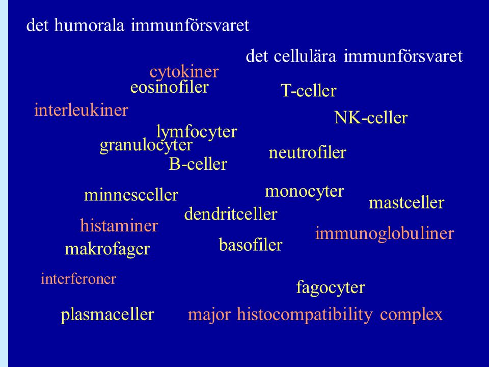 lymfocyter B-celler T-celler monocyter makrofager basofiler eosinofiler neutrofiler granulocyter fagocyter cytokiner plasmaceller minnesceller NK-cell