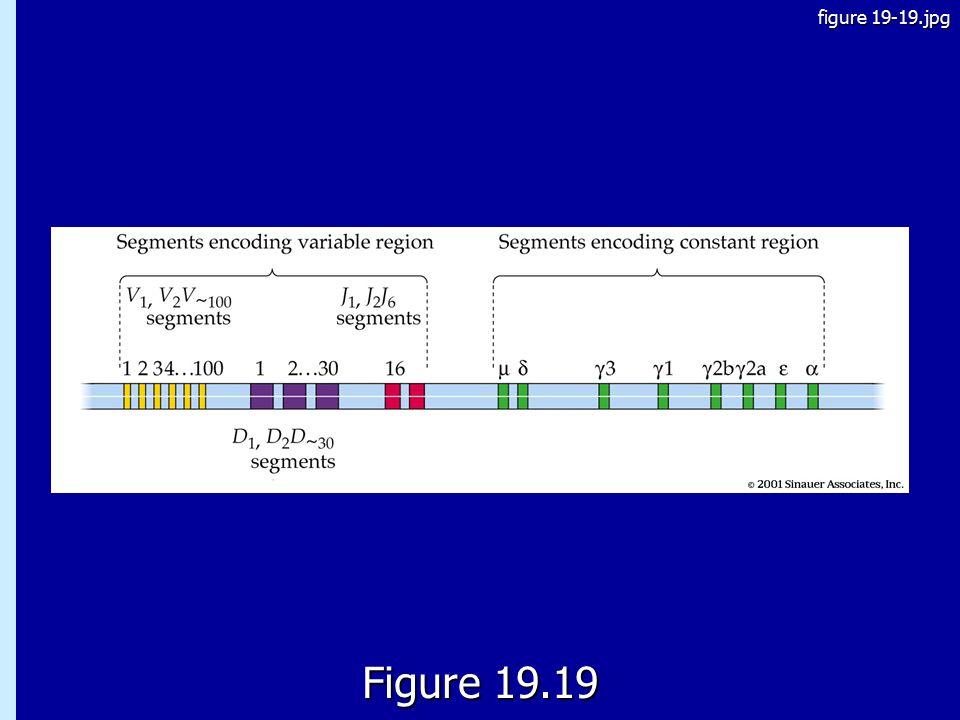 19.19 Figure 19.19 figure 19-19.jpg