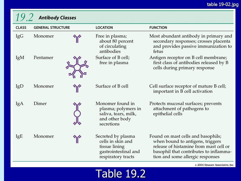19.2 Table 19.2 table 19-02.jpg