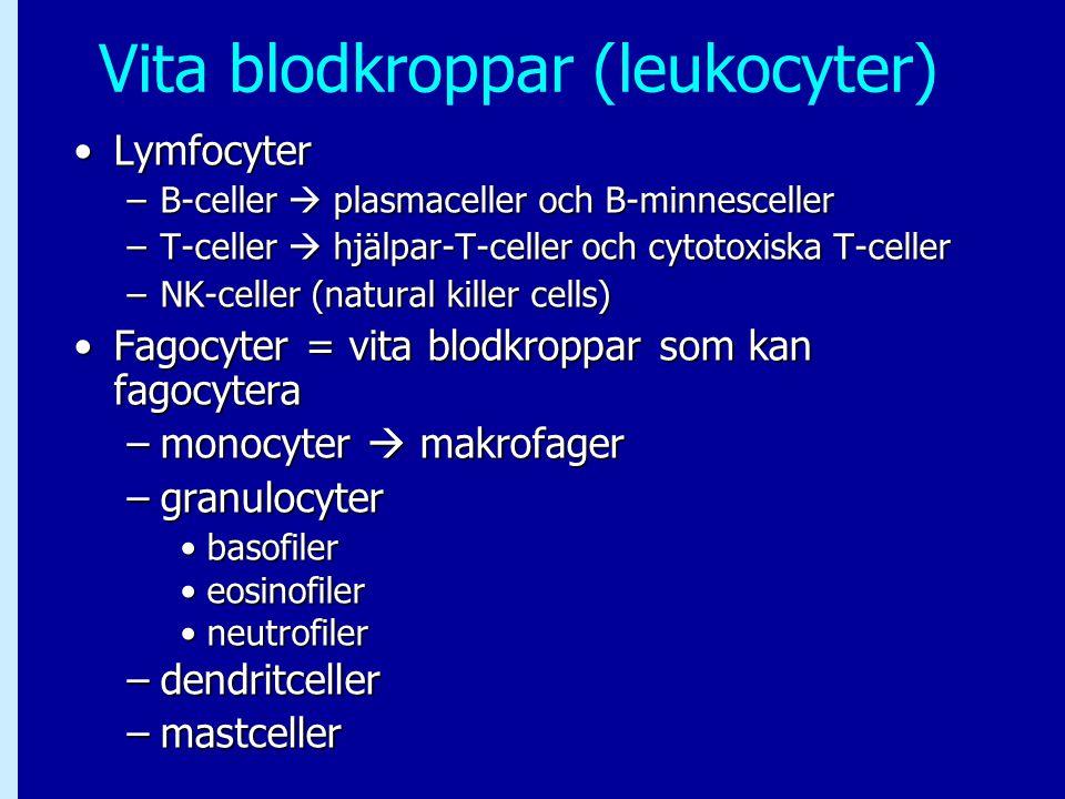 Vita blodkroppar (leukocyter) LymfocyterLymfocyter –B-celler  plasmaceller och B-minnesceller –T-celler  hjälpar-T-celler och cytotoxiska T-celler –