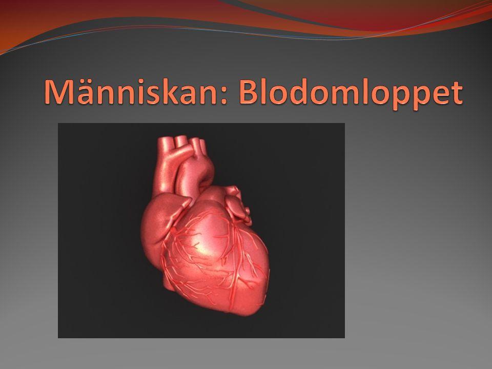 Blodet består av fyra huvudkomponenter;  Blodplasma - ca 50 % av de 4-6 liter blod vi har, - trögflytande, genomskinlig vätska som består av vatten, salt, kolhydrater, protein och hormoner.