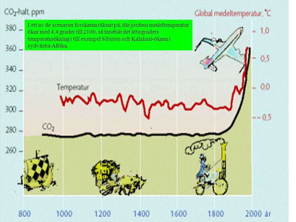 I ett av de scenarier forskarna räknat på, där jordens medeltemperatur ökar med 4,4 grader till 2100, så innebär det åtta graders temperaturökning i t