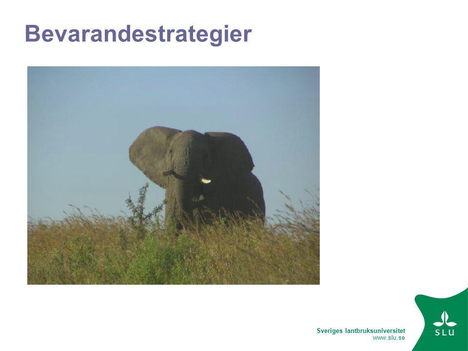 Sveriges lantbruksuniversitet www.slu.se Bevarandestrategier