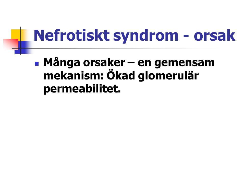 Nefrotiskt syndrom - orsak Många orsaker – en gemensam mekanism: Ökad glomerulär permeabilitet.