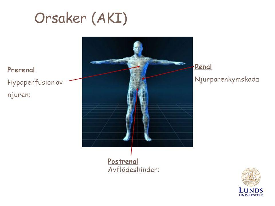 Orsaker (AKI) Prerenal Hypoperfusion av njuren: Postrenal Avflödeshinder: Renal Njurparenkymskada