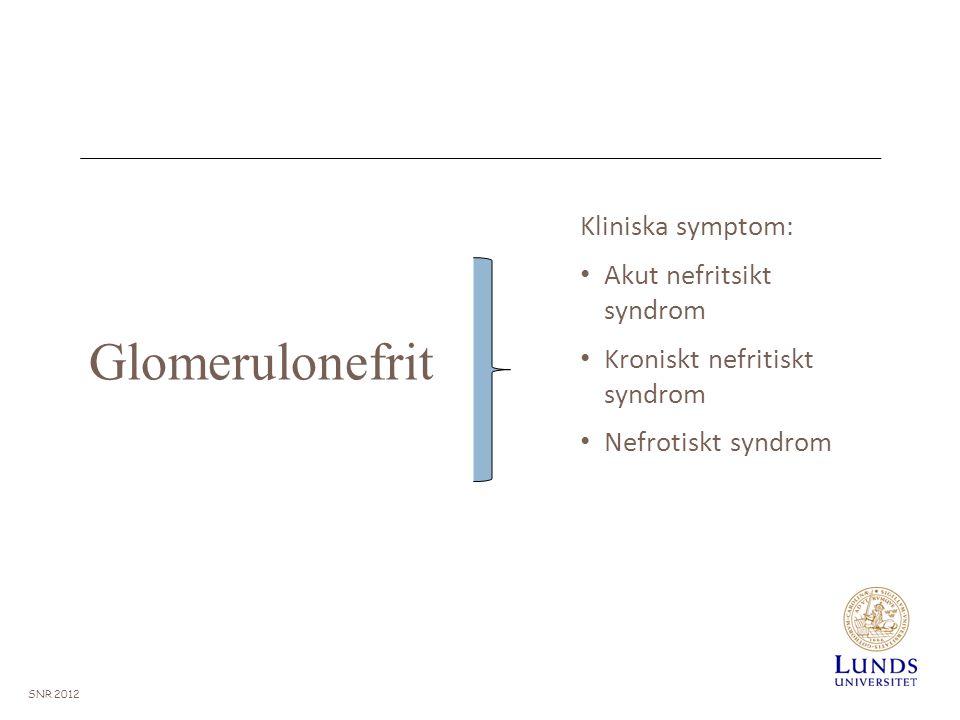 Glomerulonefrit Indelas i 7 undergrupper: IgA-nefrit är den vanligaste Primärskada i glomerulos eller sekundärt till annan sjukdom Tecken: –Proteinuri –Hematuri –Molvärk i ländrygg – kan förekomma