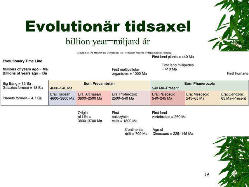 19 Evolutionär tidsaxel billion year=miljard år