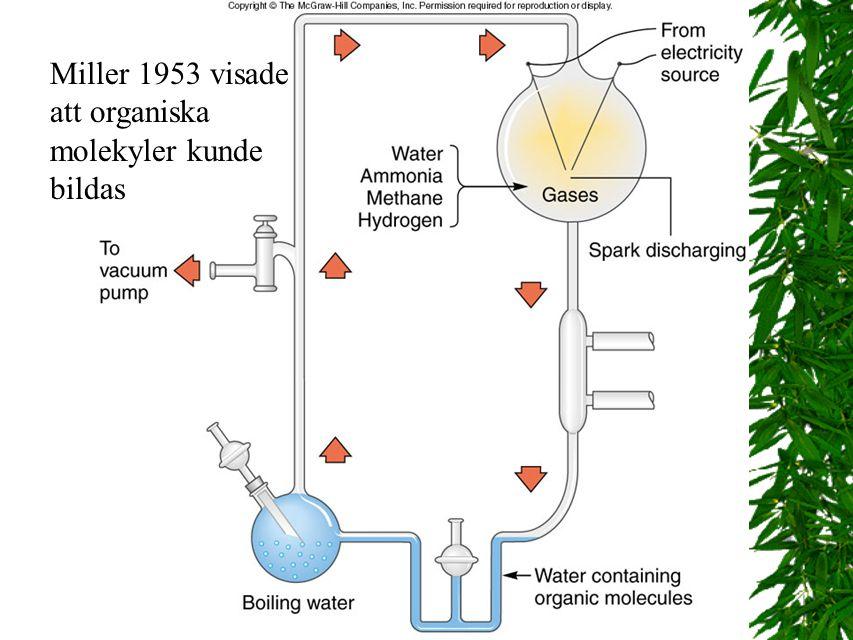 9 Fig. 22.7 Miller 1953 visade att organiska molekyler kunde bildas