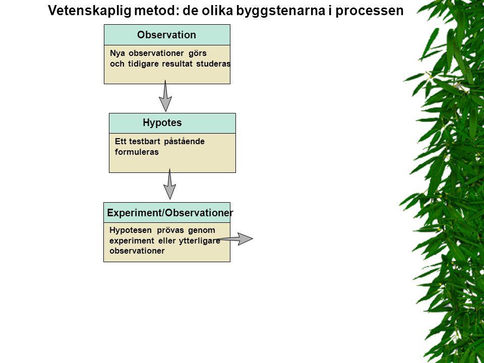 Ett testbart påstående formuleras Hypotes Observation Nya observationer görs och tidigare resultat studeras