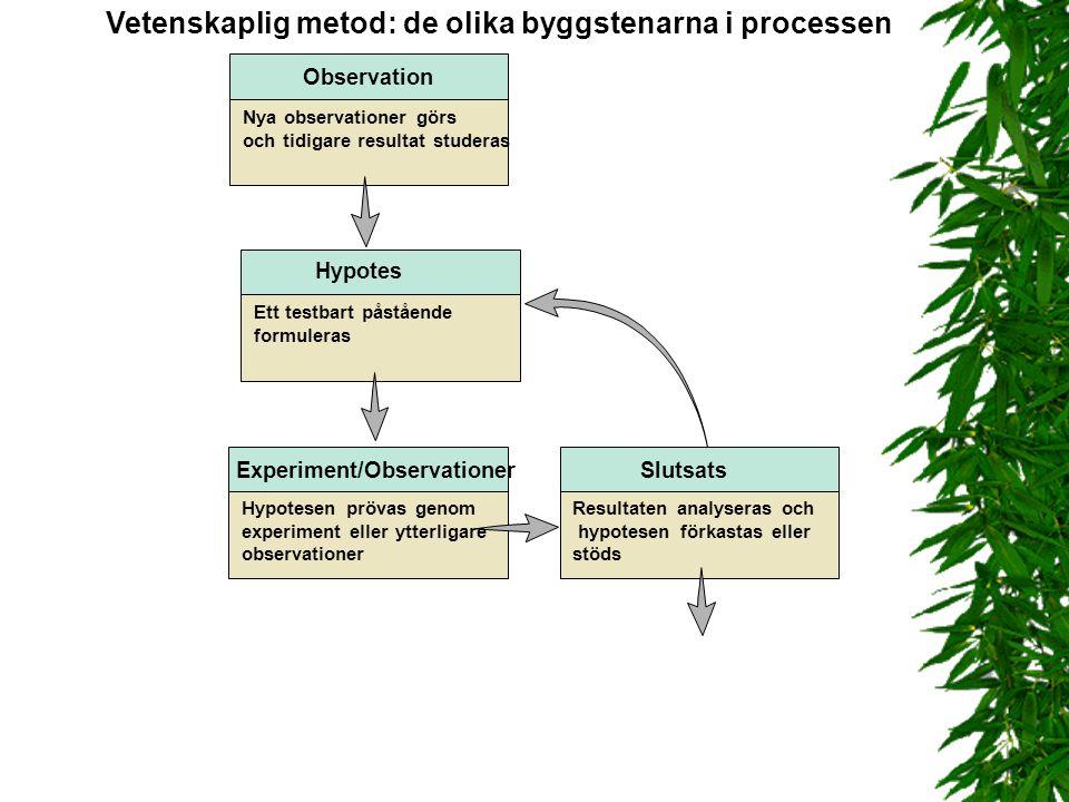 Vetenskaplig metod: de olika byggstenarna i processen Experiment/Observationer Hypotesen prövas genom experiment eller ytterligare observationer Ett t