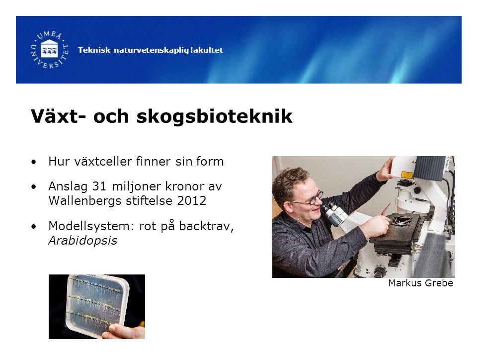 Teknisk-naturvetenskaplig fakultet Växt- och skogsbioteknik Hur växtceller finner sin form Anslag 31 miljoner kronor av Wallenbergs stiftelse 2012 Mod