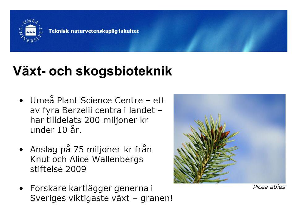 Teknisk-naturvetenskaplig fakultet Växt- och skogsbioteknik Umeå Plant Science Centre – ett av fyra Berzelii centra i landet – har tilldelats 200 miljoner kr under 10 år.