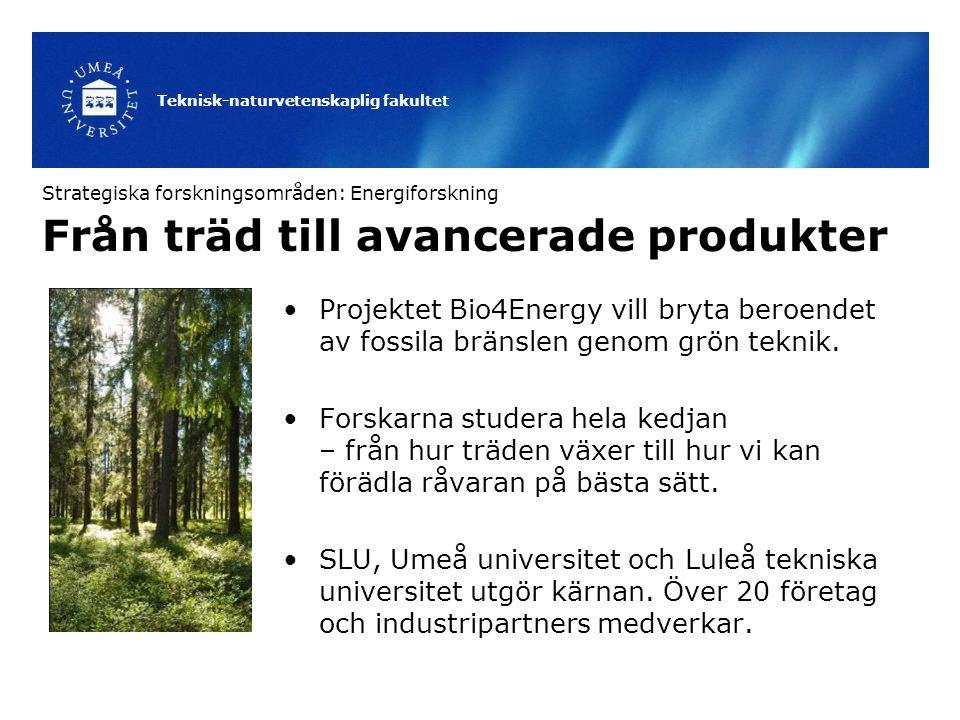 Teknisk-naturvetenskaplig fakultet Från träd till avancerade produkter Projektet Bio4Energy vill bryta beroendet av fossila bränslen genom grön teknik