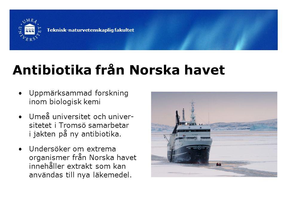 Teknisk-naturvetenskaplig fakultet Antibiotika från Norska havet Uppmärksammad forskning inom biologisk kemi Umeå universitet och univer- sitetet i Tromsö samarbetar i jakten på ny antibiotika.