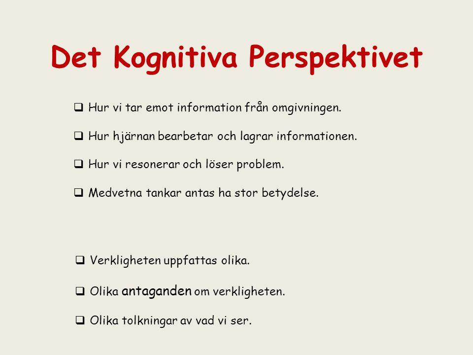 Det Kognitiva Perspektivet  Verkligheten uppfattas olika.  Olika antaganden om verkligheten.  Olika tolkningar av vad vi ser.  Hur vi tar emot inf