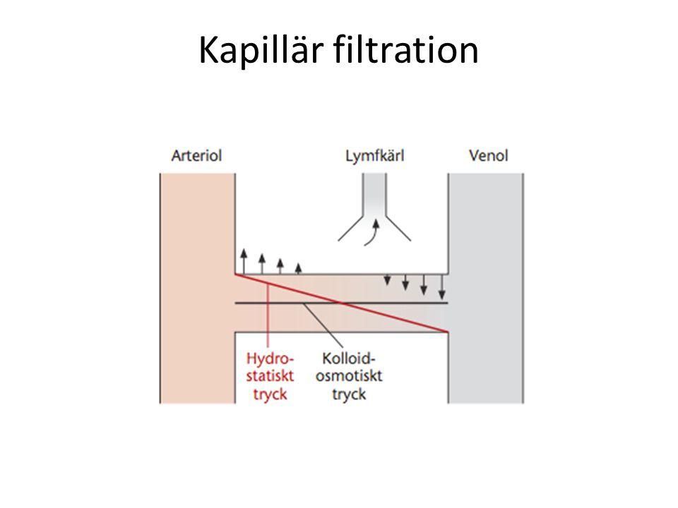 Kapillär filtration