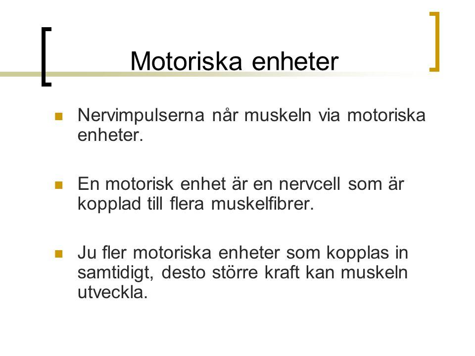 Motoriska enheter Nervimpulserna når muskeln via motoriska enheter. En motorisk enhet är en nervcell som är kopplad till flera muskelfibrer. Ju fler m