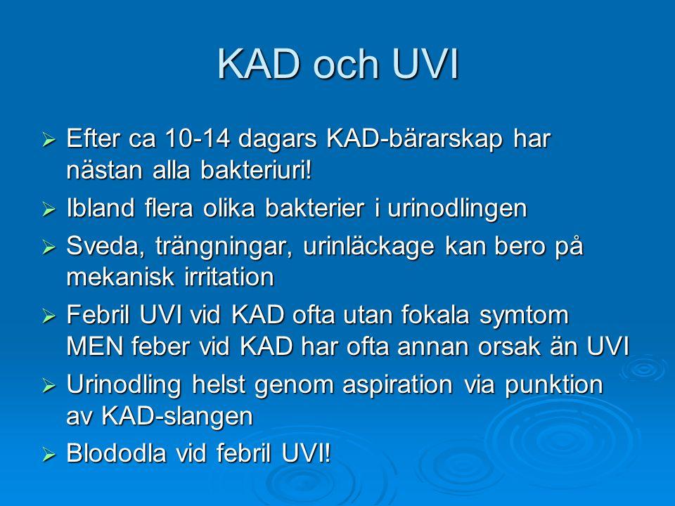 KAD och UVI  Efter ca 10-14 dagars KAD-bärarskap har nästan alla bakteriuri!  Ibland flera olika bakterier i urinodlingen  Sveda, trängningar, urin