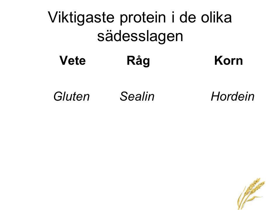6 Viktigaste protein i de olika sädesslagen VeteRåg Korn Gluten SealinHordein