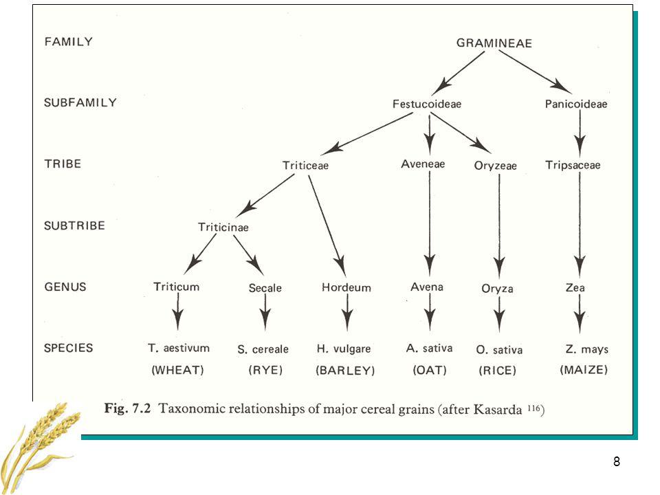 19 Osteopeni före och efter introduktion av glutenfri diet -0.5 0.0 Z-score Spine Femoral neck Valdimarsson et al.