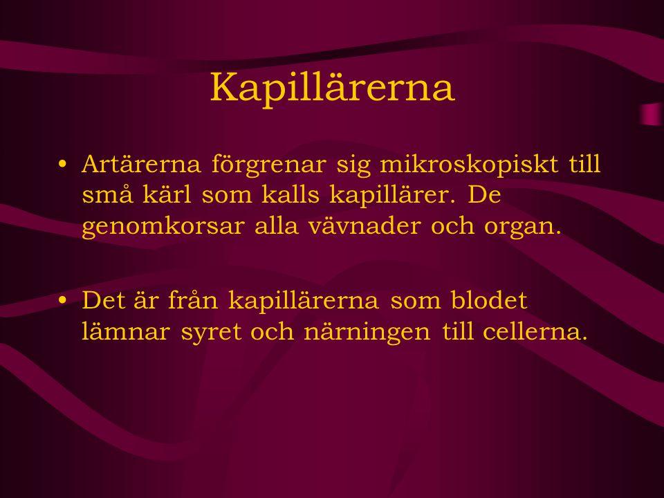 Kapillärerna Artärerna förgrenar sig mikroskopiskt till små kärl som kalls kapillärer. De genomkorsar alla vävnader och organ. Det är från kapillärern
