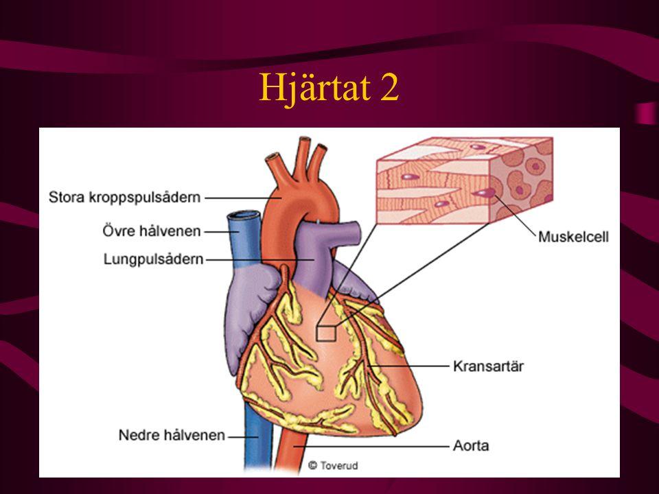Blodomloppet En människa har ungefär 5 liter blod som pumpas runt av hjärtat i ett slutet system.