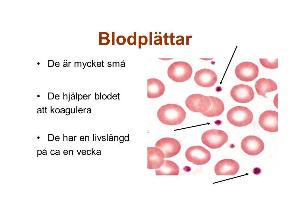 Blodplättar De är mycket små De hjälper blodet att koagulera De har en livslängd på ca en vecka