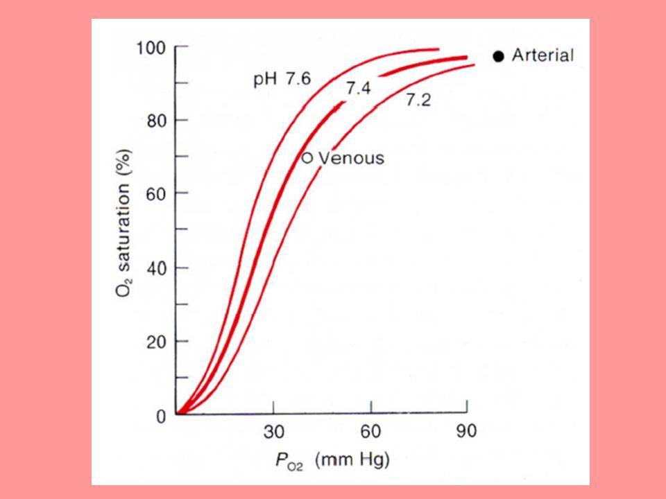 Små djur har högre syreförbrukning/kropps- massa än stora djur  deras blod är i större behov av syre.