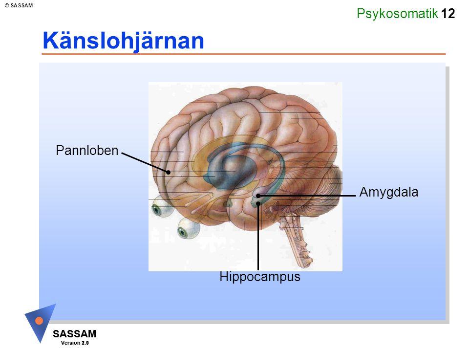 Psykosomatik 12 SASSAM Version 1.1 © SASSAM SASSAM Version 2.0 Känslohjärnan Amygdala Hippocampus Pannloben