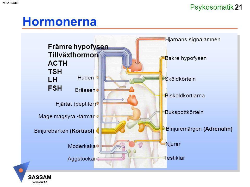 Psykosomatik 21 SASSAM Version 1.1 © SASSAM SASSAM Version 2.0 Hormonerna Hjärnans signalämnen Bakre hypofysen Sköldkörteln Bisköldkörtlarna Bukspottk