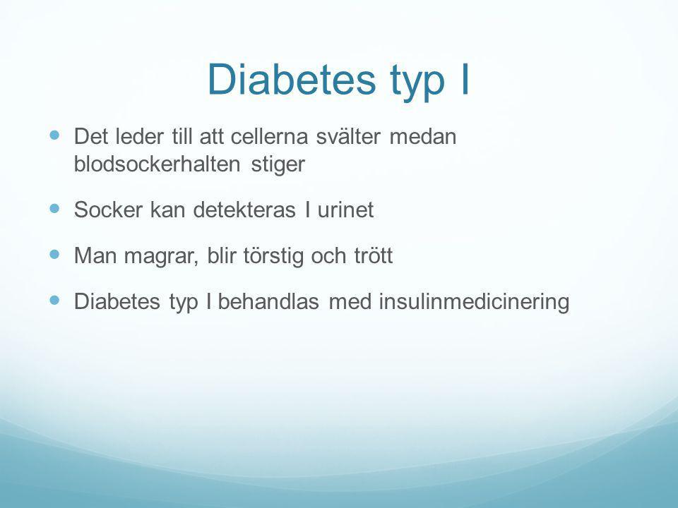 Diabetes typ I Det leder till att cellerna svälter medan blodsockerhalten stiger Socker kan detekteras I urinet Man magrar, blir törstig och trött Dia