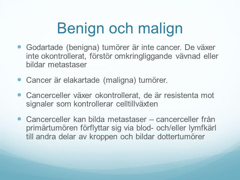 Benign och malign Godartade (benigna) tumörer är inte cancer. De växer inte okontrollerat, förstör omkringliggande vävnad eller bildar metastaser Canc
