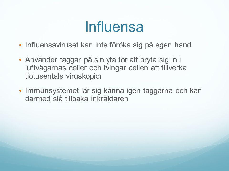 Influensa Influensaviruset kan inte föröka sig på egen hand. Använder taggar på sin yta för att bryta sig in i luftvägarnas celler och tvingar cellen