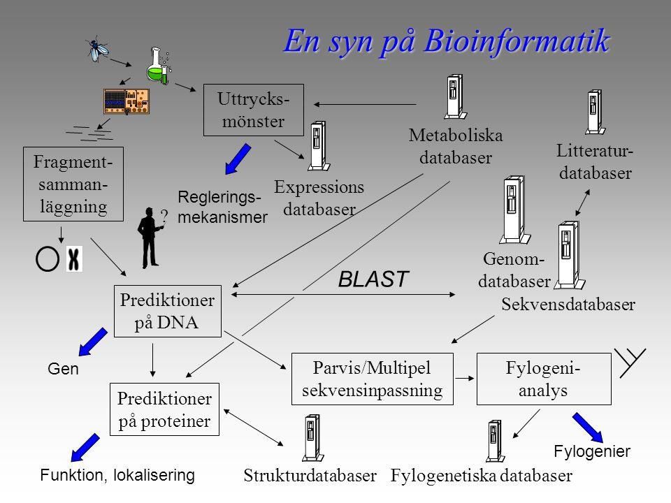 BLAST Strukturdatabaser Sekvensdatabaser Prediktioner på proteiner Fylogeni- analys Parvis/Multipel sekvensinpassning Fragment- samman- läggning ? En