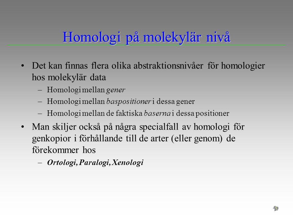 Homologi på molekylär nivå Det kan finnas flera olika abstraktionsnivåer för homologier hos molekylär data –Homologi mellan gener –Homologi mellan bas