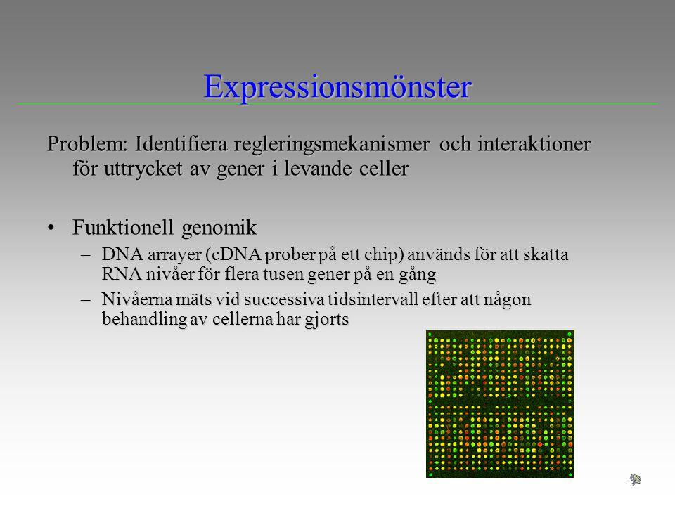 Expressionsmönster Problem: Identifiera regleringsmekanismer och interaktioner för uttrycket av gener i levande celler Funktionell genomikFunktionell
