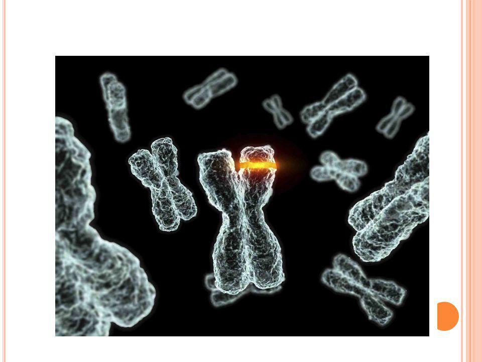 Mutationer – en förändring i arvsmassan