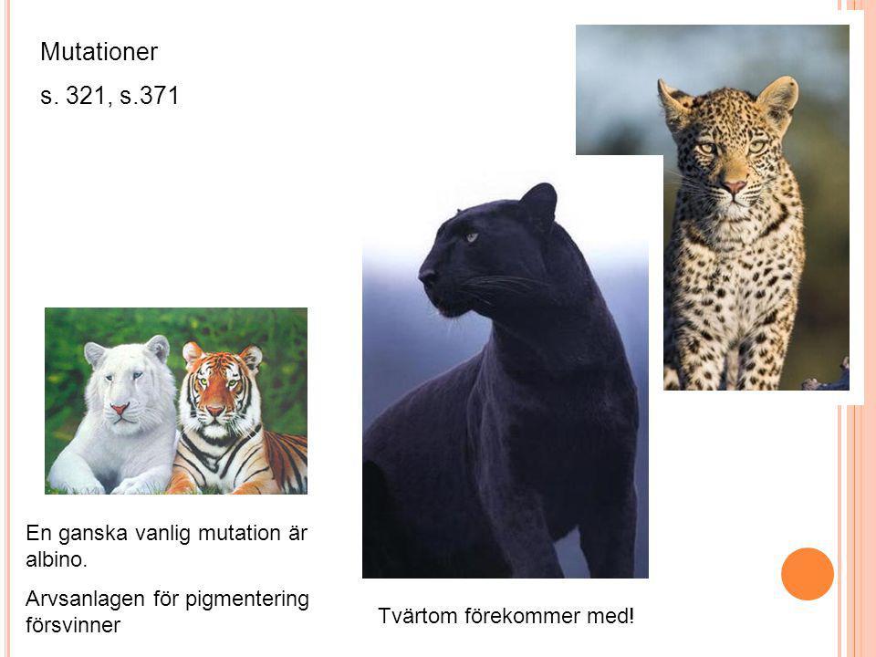 Mutationer s. 321, s.371 En ganska vanlig mutation är albino. Arvsanlagen för pigmentering försvinner Tvärtom förekommer med!