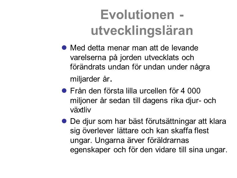 Evolutionen - utvecklingsläran Med detta menar man att de levande varelserna på jorden utvecklats och förändrats undan för undan under några miljarder