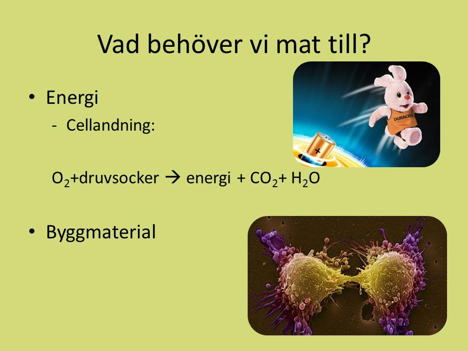 Vad behöver vi mat till? Energi -Cellandning: O 2 +druvsocker  energi + CO 2 + H 2 O Byggmaterial
