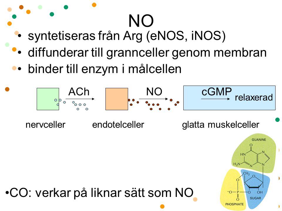NO syntetiseras från Arg (eNOS, iNOS) diffunderar till grannceller genom membran binder till enzym i målcellen nervceller endotelceller glatta muskelc