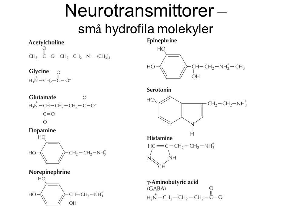 Neurotransmittorer – sm å hydrofila molekyler