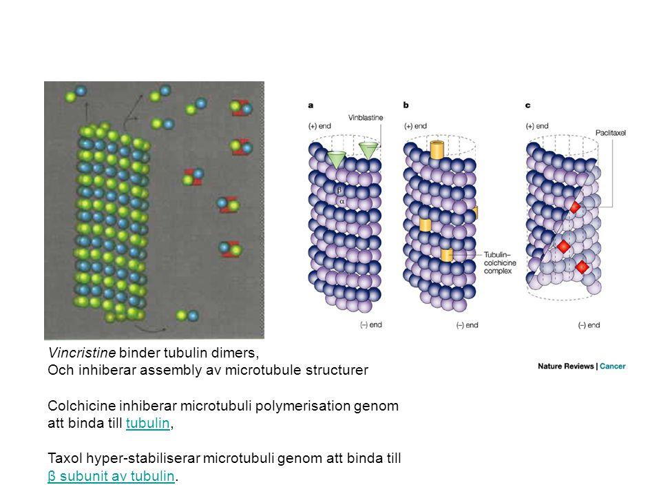 Vincristine binder tubulin dimers, Och inhiberar assembly av microtubule structurer Colchicine inhiberar microtubuli polymerisation genom att binda till tubulin,tubulin Taxol hyper-stabiliserar microtubuli genom att binda till β subunit av tubulin.