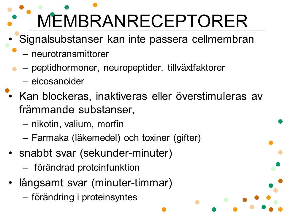 Signalsubstanser kan inte passera cellmembran –neurotransmittorer –peptidhormoner, neuropeptider, tillväxtfaktorer –eicosanoider Kan blockeras, inakti