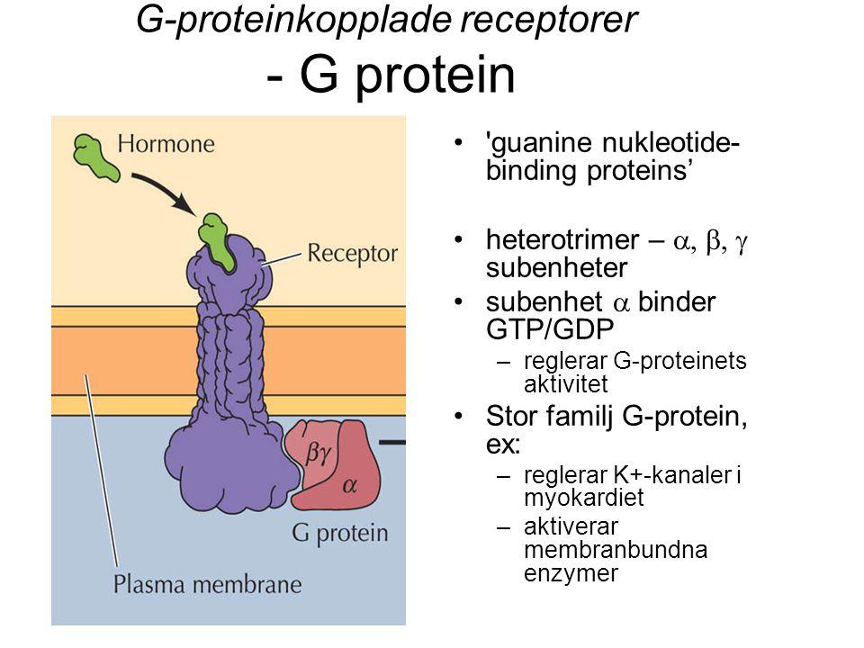 G-proteinkopplade receptorer - G protein 'guanine nukleotide- binding proteins' heterotrimer –  subenheter subenhet  binder GTP/GDP –reglerar