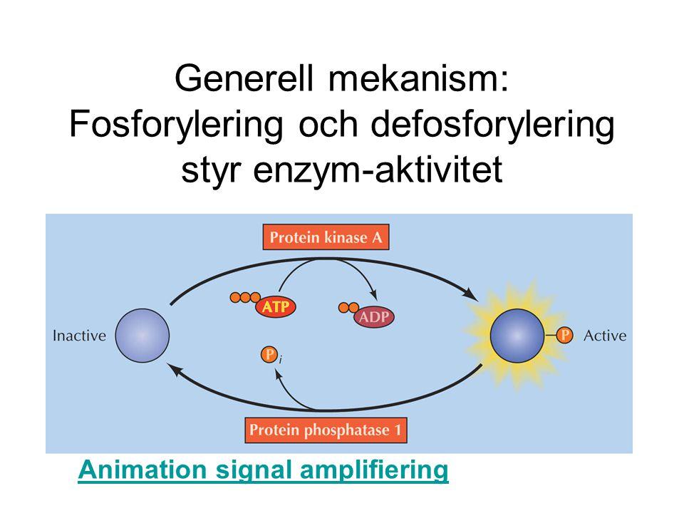 Generell mekanism: Fosforylering och defosforylering styr enzym-aktivitet Animation signal amplifiering