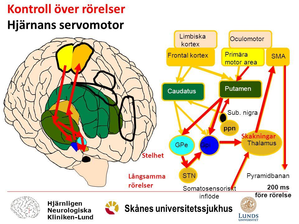 Hjärnligen Neurologiska Kliniken-Lund Skånes universitetssjukhus Somatotopt organiserat Motoriska/oculomotorius putamen Frontala/limbiska caudatus